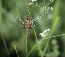 ??  ?? Dragonfly at Daneway