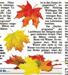 Pressreader Donau Zeitung 2018 11 16 Woher Wissen Laubbaume