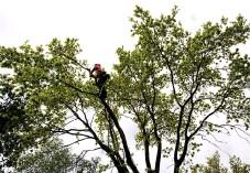 """?? Bild: Håkan Johansson ?? """"Trädfällningen går ofta relativt fort, men sedan ska det apteras och det ska köras där ifrån och framför allt ska det städas efteråt"""", säger Henrik Nilsson."""