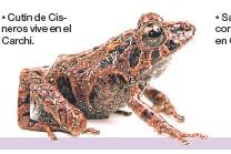 ??  ?? • Cutín de Cisneros vive en el Carchi. •