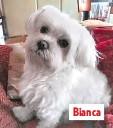 ??  ?? Bianca