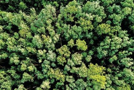??  ?? Für nachhaltige Spezialfonds, etwa zum Thema Wald, müssen Anleger tiefer in die Tasche greifen.