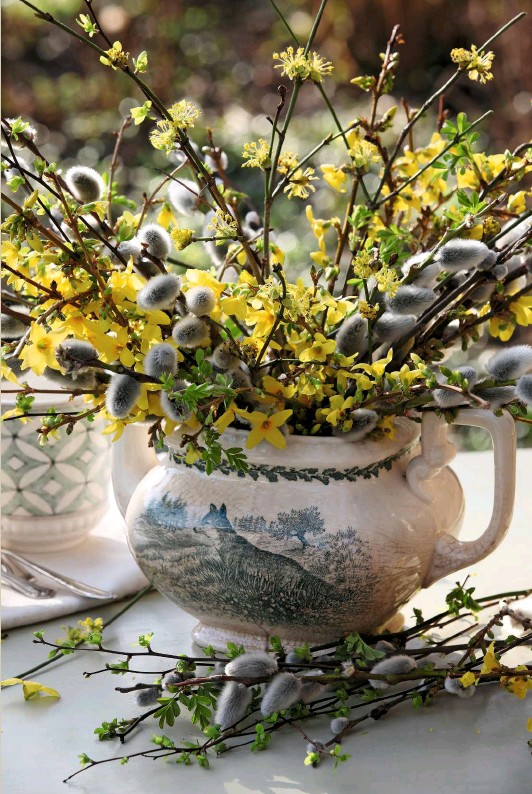 ??  ?? Spiky twigs of vibrant yellow forsythia and cornelian cherry, offset by soft, furry catkins, burst from a traditional English china teapot decorated with a scene from nature.
