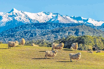 ??  ?? FORTRESS: An increase in NZ lamb imports could be used by the EU to intensify rules.