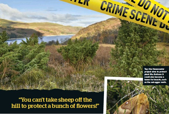 ??  ?? Top: the Haweswater project aims to protect plant life. Bottom: it could also become a haven for insects, such as the oak eggar moth.