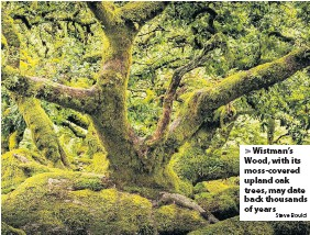 ?? Steve Bould ?? > Wistman's Wood, with its moss-covered upland oak trees, may date back thousands of years