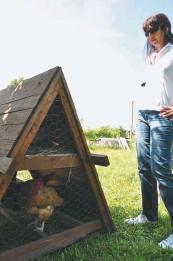 ??  ?? Otra de las ventajas es que protege a las aves y a los huevos de los predadores.
