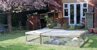 ??  ?? BELOW: The rabbit-filled pens in Lesley Hordon's garden