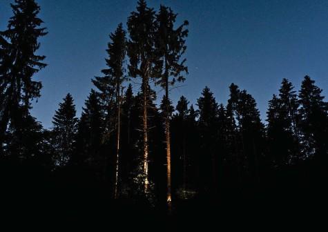 ??  ?? Der nächtliche Wald ist schön und unheimlich.