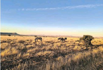 ?? PICTURE: IAN SUTHERLAND ?? Mountain Zebra National Park was proclaimed in 1937 to save the endangered Cape mountain zebra.