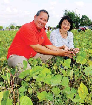 """??  ?? CVAARRD consortium director Dr. William C. Medrano and PCAARRD-ACD director Marita A. Carlos showing a handful of freshly picked """"black gold"""" at a farm in San Mateo, Isabela."""