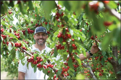 "?? BEA AHBECK/NEWS-SENTINEL ?? James Chinchiolo, owner of Lodi Blooms, a new ""you pick"" cherry orchard, poses for a portrait in his orchard in Lodi on Wednesday. The business will open Friday."