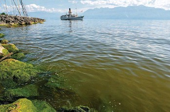 ?? VANESSA CARDOSO ?? À Pully, ce mardi, la présence de l'algue était bien visible.