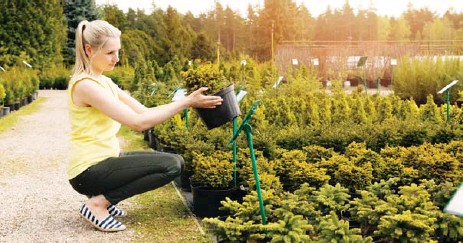 ??  ?? Young trees want to put down roots and get growing. When shopping for a tree, make sure to pick a young, vigorous one still in a pot, Mark Cullen writes.