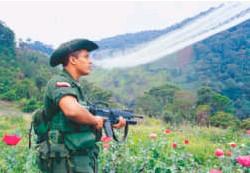 ??  ?? Para el Gobierno es clave retomar la aspersión aérea en su lucha contra las drogas.