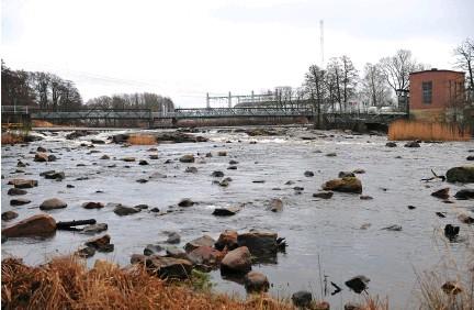 """??  ?? Hertingprojektet i falkenberg lyfts fram som lyckat när det kommer till att öka laxbeståndet. """"I pipeline ligger en nationell plan för miljöprövning av vattenkraften, där det kommer bli mycket fokus på att fisken ska få vandra fritt i vattendragen"""", säger Hans Schibli. bild: Tobias Svensson"""