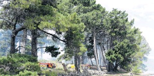 ?? PHOTO: GERARD O'BRIEN ?? Beach blaze . . . Firefighters tackle a fire in the sand dunes and pine trees at Warrington yesterday afternoon.