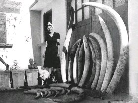 ??  ?? ABOVE: Anne Manners at their home in LM. A note in her handwritin­g states that Harry did not shoot the biggest (outermost) tusks; he found the skull and bones at a dried-up waterhole and simply drew the tusks.