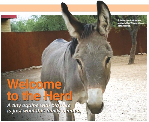 ??  ?? Johnny the donkey was named after Western icon John Wayne.