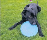 ??  ?? Frisbee fun Zeus is at play