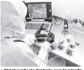 ??  ?? > El laboratorio trabaja con la planta y la extracción de propiedades para algunos productos.