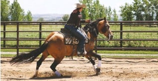 ??  ?? My first cow horse experience included riding world champion stud Shining Lil Nic for Brad Barkemeyer's Horse&Rider OnDemand series.