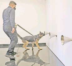 ?? — AFP photos ?? Sniffer dog Rox takes part in a training to detect Covid-19 through sweat samples at a facility in Lebanon's capital Beirut.