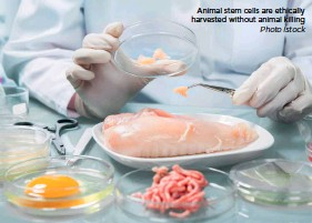 ??  ?? Animal stem cells are ethically harvested without animal killing