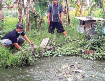 ?? ALLEX QOMARULLAH/JAWA POS ?? DAPAT BANTUAN: Sebanyak 5.000 benih ikan lele dan nila disebar di kolam milik RW V, Pogot, Kelurahan Tanah Kali Kedinding.