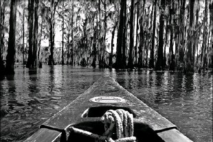 ?? Vernon Bryant/Staff Photographer ?? Uncertain, Texas, sits on the banks of Caddo Lake, in the northeast corner of the state.