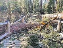 ?? Courtesy National Park Service ?? Mariposa Grove in Yosemite National Park was closed because of damage sustained during a Jan. 19 windstorm.