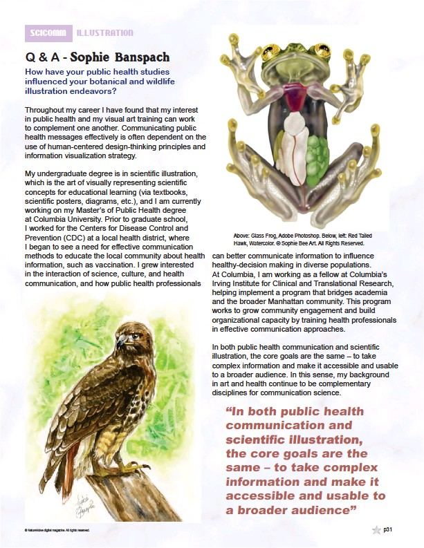 ??  ?? Above: Glass Frog, Adobe Photoshop. Below, left: Red Tailed Hawk, Watercolor. © Sophie Bee Art. All Rights Reserved.