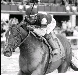 ?? COADY PHOTOGRAPHY ?? Stage Raider is a brother to 2018 Triple Crown winner Justify.