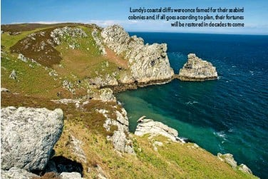 ??  ?? Lundy's coastal cliffs were once famed for their seabird colonies and, if all goes according to plan, their fortunes will be restored in decades to come