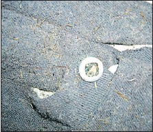 ??  ?? Close-up of button on Capri pants found on Merry Island.