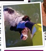 ??  ?? Or­deal: O Terry Dodd with Molly yes­ter­day. y Left: The spaniel be­ing b saved by a lifeboat­man