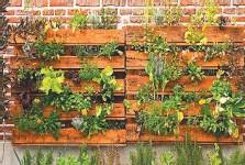 ??  ?? En una huerta vertical se pueden cultivar verduras de hojas como lechuga, perejil, rúcula y todas las especies de aromáticas como tomillo.