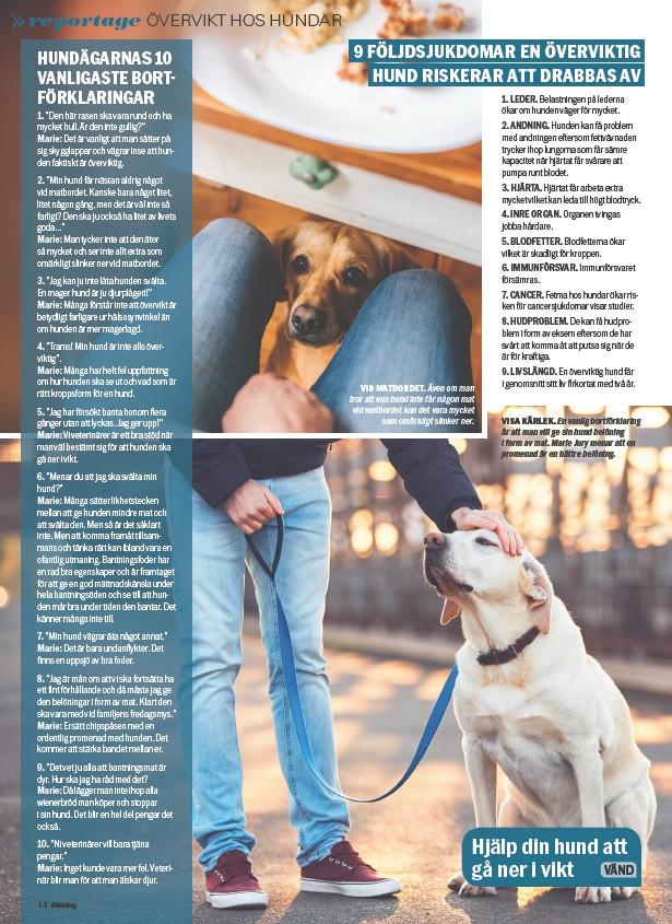 ??  ?? VID MATBORDET. Även om man tror att ens hund inte får någon mat vid matbordet kan det vara mycket som omärkligt slinker ner.VISA KÄRLEK. En vanlig bortförklaring är att man vill ge sin hund belöning i form av mat. Marie Jury menar att en promenad är en bättre belöning.