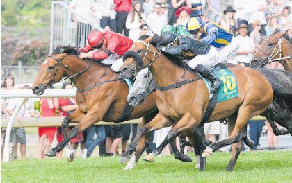 ?? Picture / Trish Dunell ?? Consensus (10) has won eight races, including the Group 1 Zabeel Classic in 2016.