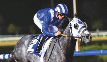 ?? Viren­dra Sak­lani/Gulf News Ar­chives ?? Al­manaara, who won the Listed Garhoud Sprint in 2016, looks to be the one to beat in the race that has at­tracted a strong field of ten run­ners.