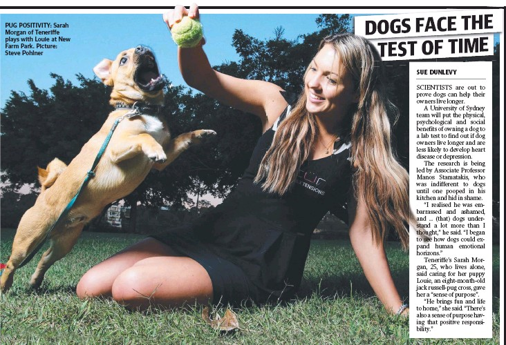 ??  ?? PUG POSITIVITY: Sarah Morgan of Teneriffe plays with Louie at New Farm Park. Picture: Steve Pohlner