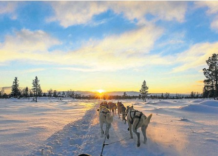 ?? Picture: 123rf.com/kjekol ?? PULL TOGETHER A team of dogs makes short work of hauling a sled.