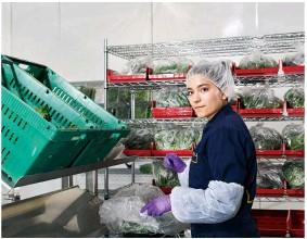 ??  ?? Antes del empaquetado, las hortalizas pasan por el control de calidad. La empresa servirá a 430 establecimientos de California y planea expandirse por todo el mundo.