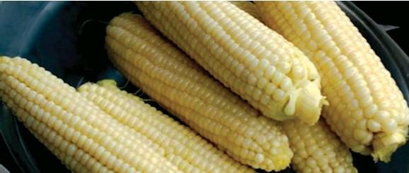 Kornik Corn