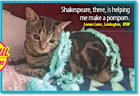 ??  ?? Shakespeare, three, is helping me make a pompom.