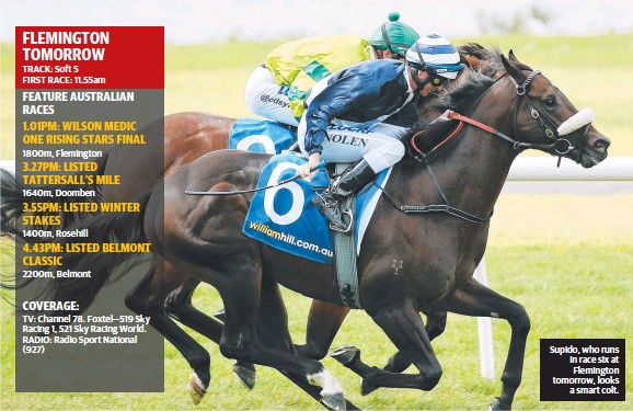 ??  ?? Supido, who runs in race six at Flemington tomorrow, looksa smart colt.