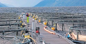 ??  ?? The Scot­tish Aqua­cul­ture In­no­va­tion Cen­tre has at­tracted a £10m fund­ing boost
