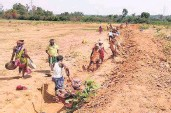 ?? SPE­CIAL AR­RANGE­MENT ■ ?? Long road ahead: Work­ers en­gaged in an MGNREGA project at Nabarang­pur district in Odisha.