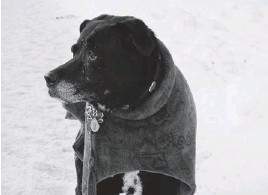 ??  ?? Salomon's dog Misty, two weeks before she died.