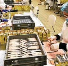 ??  ?? À La Quiberonnaise, le maquereau déloge la sardine pendant un mois.